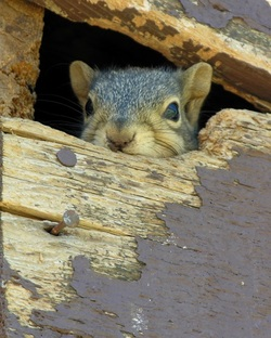 squirrel in a house