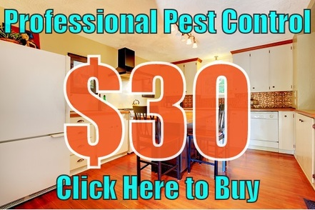 professional pest control special