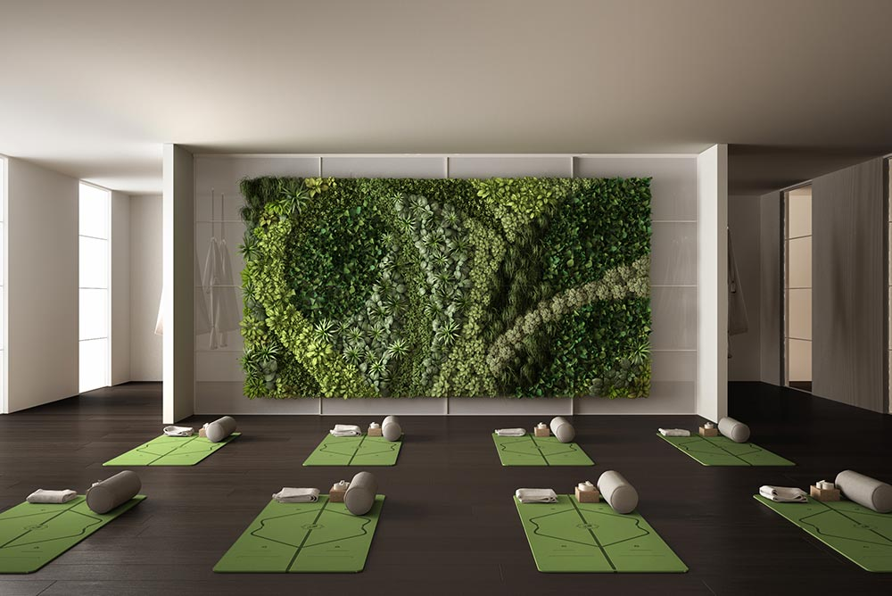 Picture of living green wall in a yoga studio