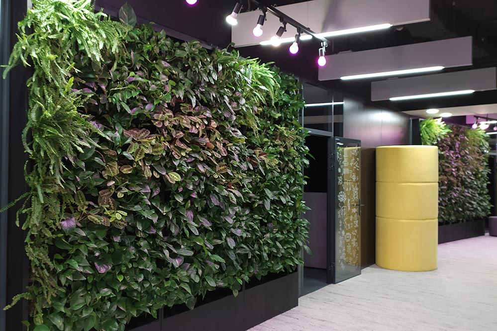 Picture vertical gardens in a hallway with colorful lighting
