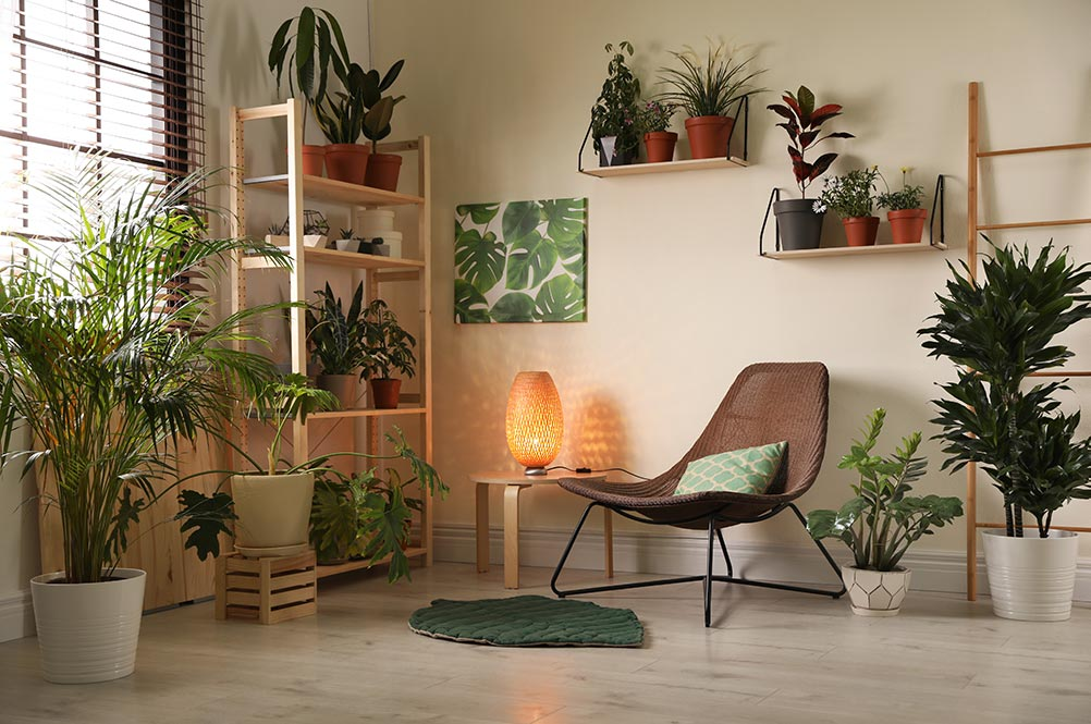 Picture of plants in a waiting area