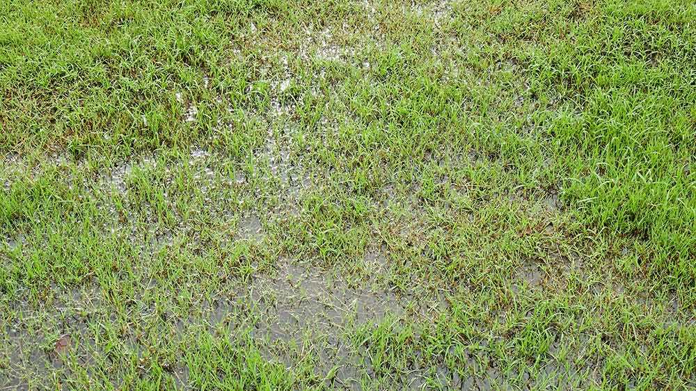 Picture of a wet lawn in Baton Rouge, Louisiana